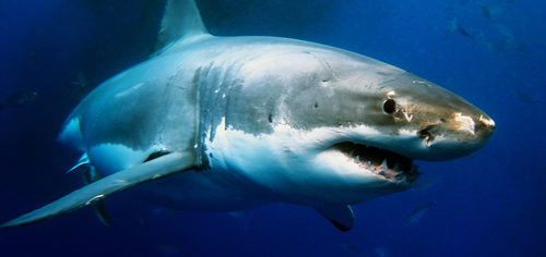 Growing Your Business Only FEELS Like a Shark Attack